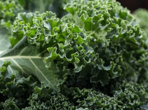 kale is a plant-based food high in iron