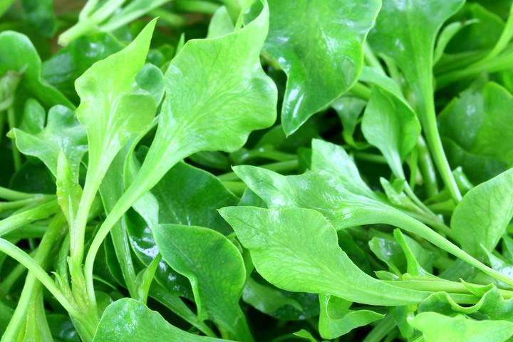 Watercress is a healthier green than kale
