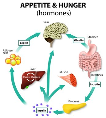 weight loss hormones to lose weight