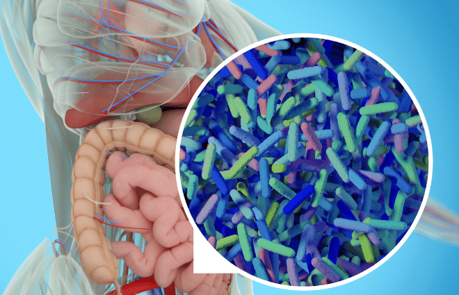 diagram of gut microbiome